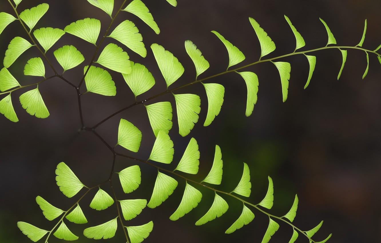 Фото обои макро, природа, лепестки, веточки