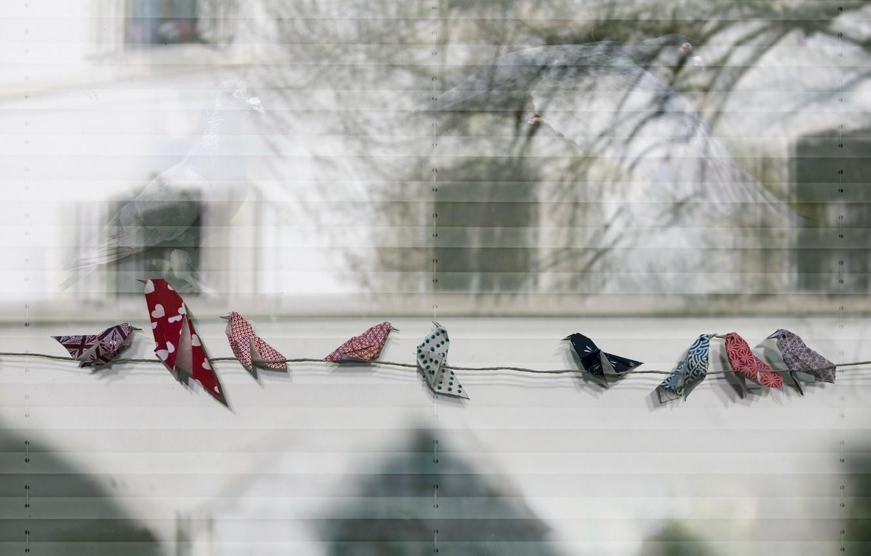 Фото обои птицы, фон, верёвка