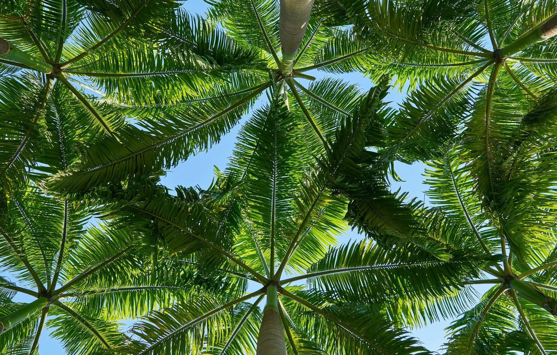 Фото обои листья, тропики, пальмы