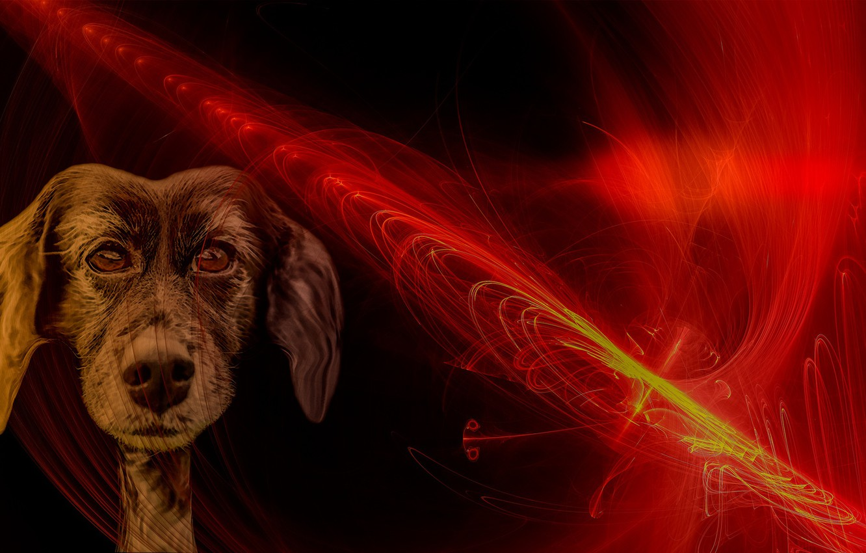 Фото обои линии, огонь, собака, мордочка, пёс