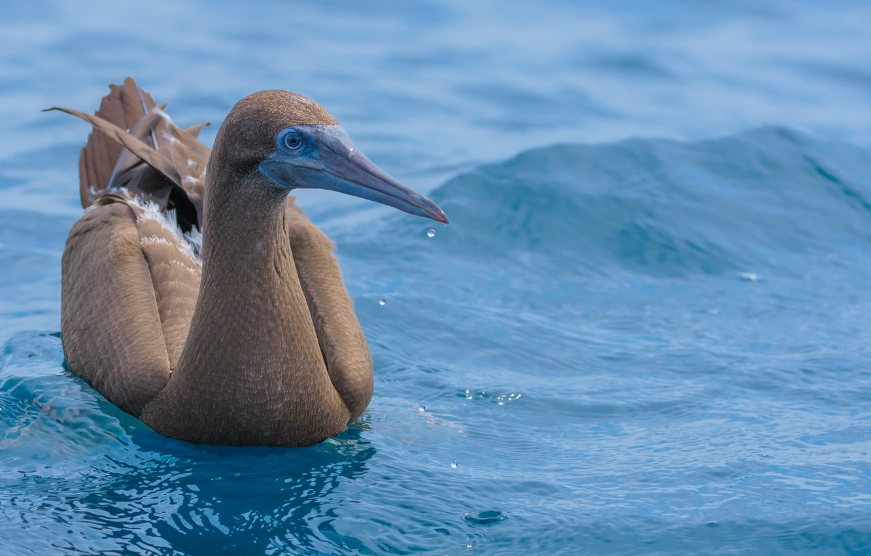 Фото обои вода, птица, плывет