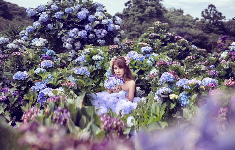 Фото обои девушка, цветы, фотоссесия, гортенизия