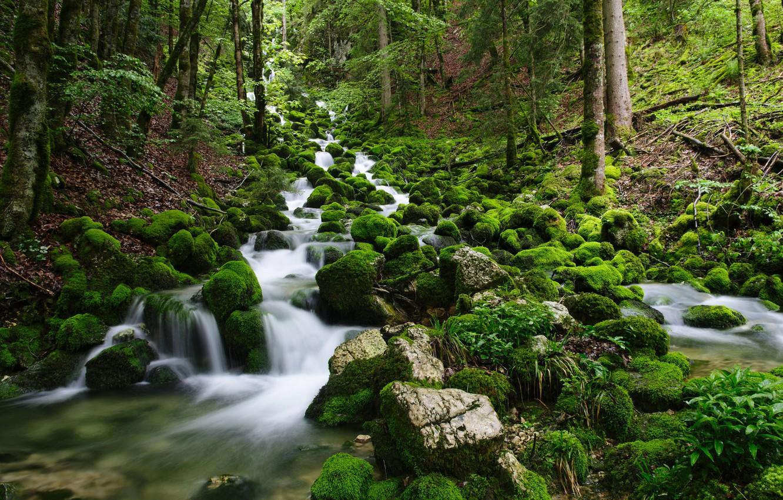 Фото обои лес, природа, река, камни, мох, поток