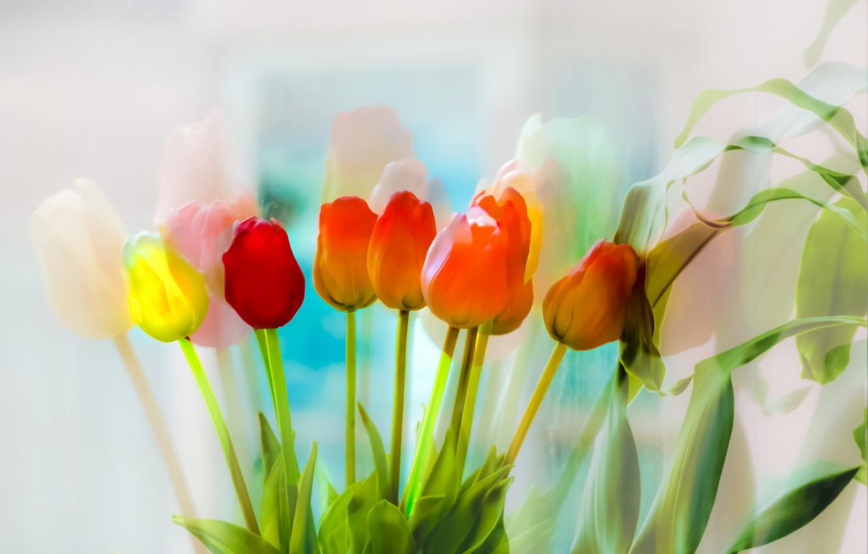 Фото обои цветы, цвет, тюльпаны