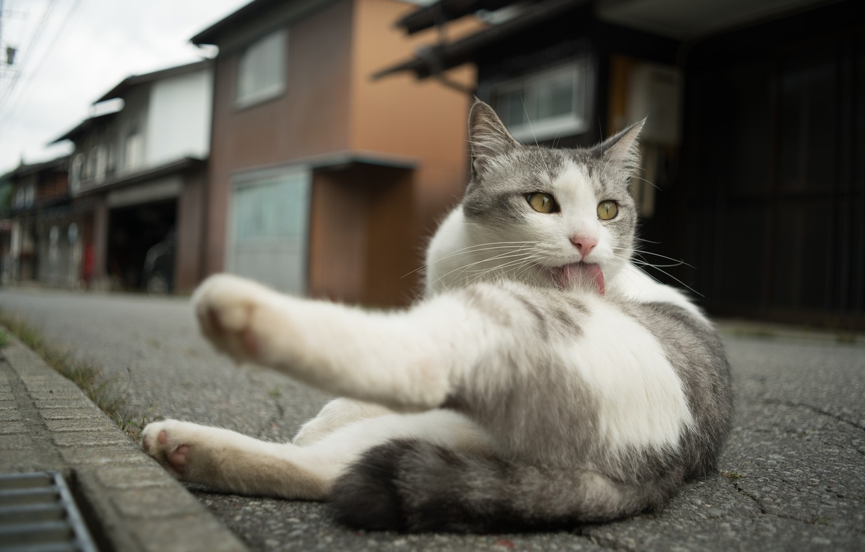 Фото обои язык, глаза, кот, улица