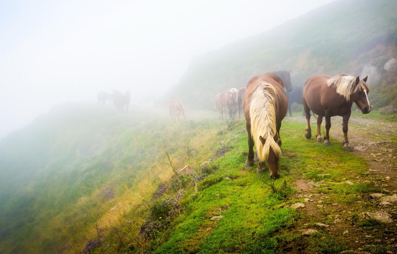 Фото обои дорога, зелень, трава, пейзаж, природа, туман, настроение, конь, лошадь, кони, утро, склон, лошади, холм, табун, …