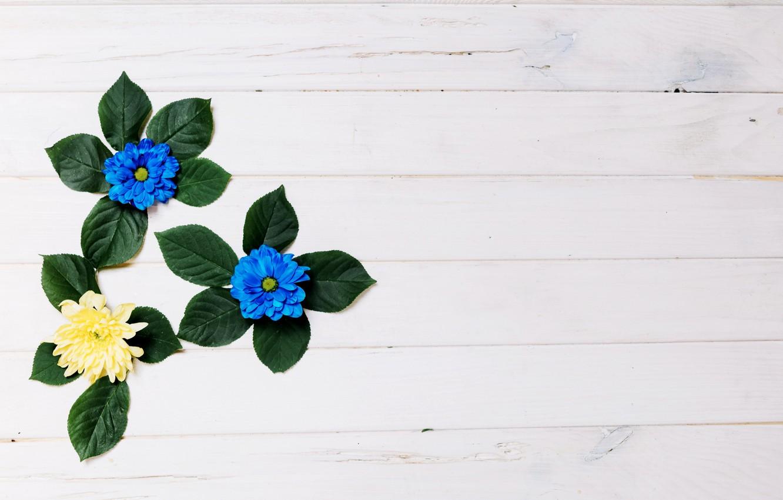 Фото обои листья, цветы, белый фон, хризантемы