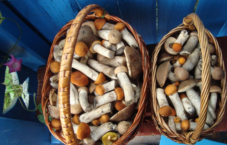 Фото обои грибы, грибочки, ох уж эти походы в лес