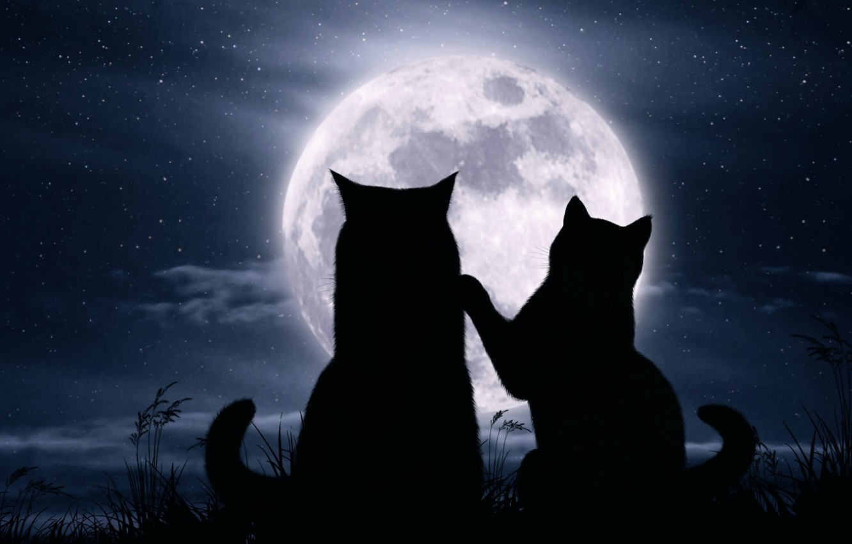 Фото обои кошки, ночь, луна, романтика, звёзды