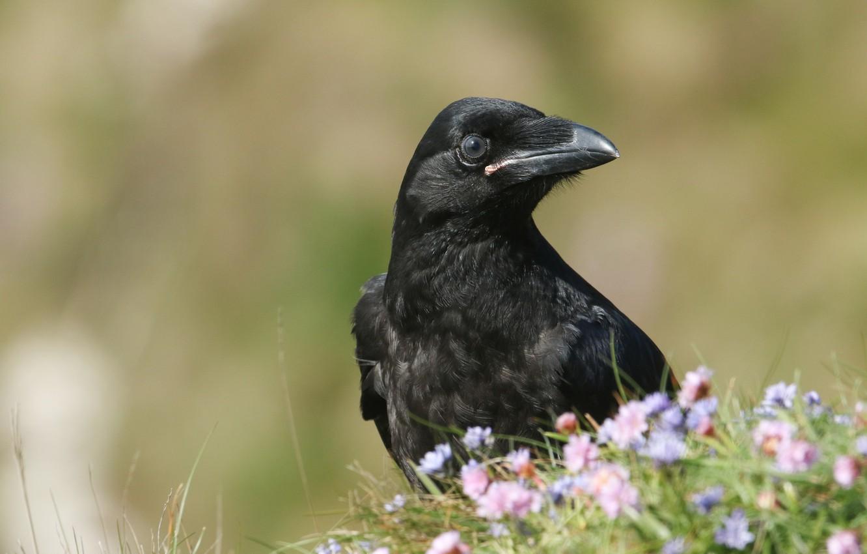 Фото обои цветы, природа, птица, черная