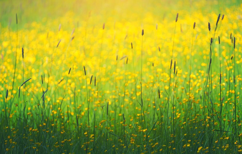 Фото обои поле, лето, трава, цветы, боке