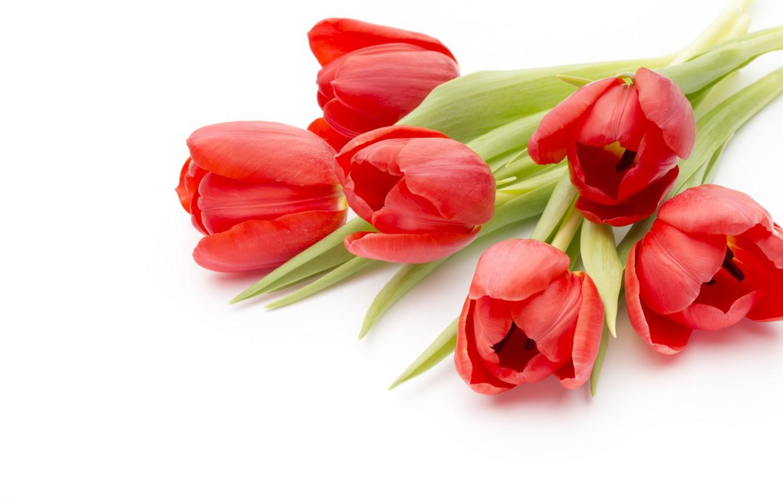 Фото обои цветы, букет, red, fresh, pink, flowers, beautiful, romantic, tulips, красные тюльпаны