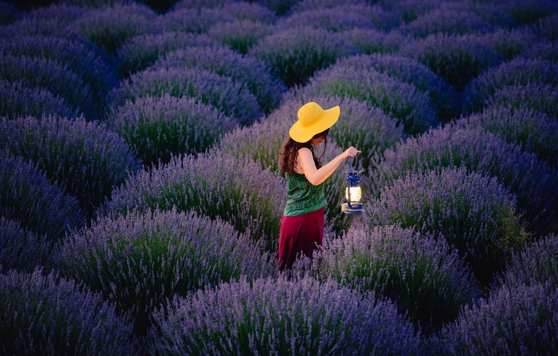 Фото обои поле, девушка, цветы, лампа, вечер, прогулка, лаванда