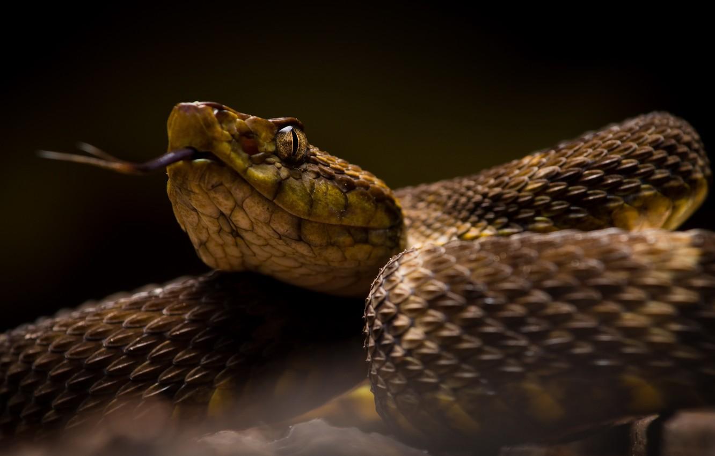 Фото обои природа, фон, змея