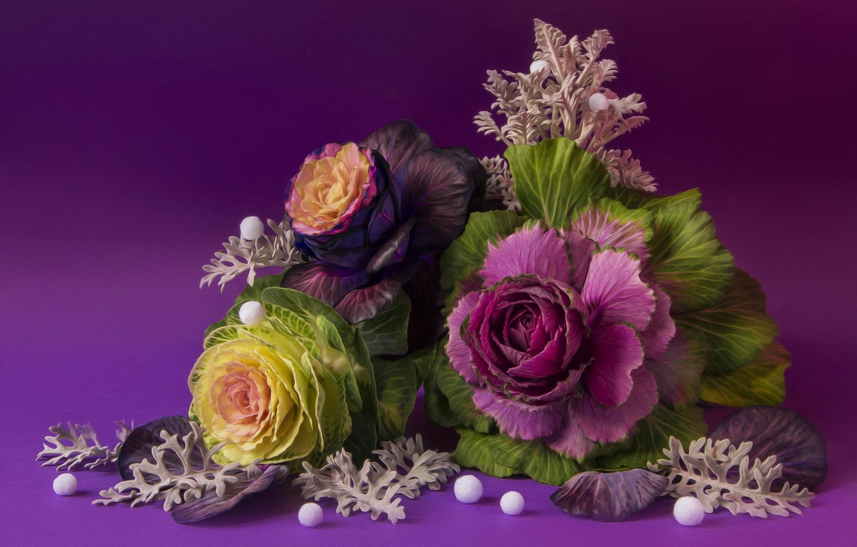 Фото обои осень, натюрморт, овощи, капуста