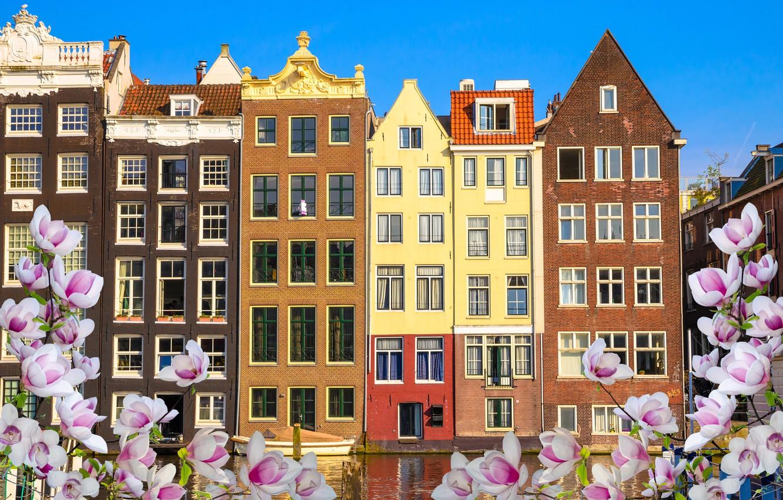 Фото обои река, весна, Амстердам, цветение, blossom, Amsterdam, flowers, old, spring, buildings, Netherlands, canal