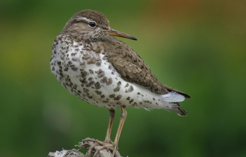 публикуете что-то серая птичка с длинным клювом фото открывают