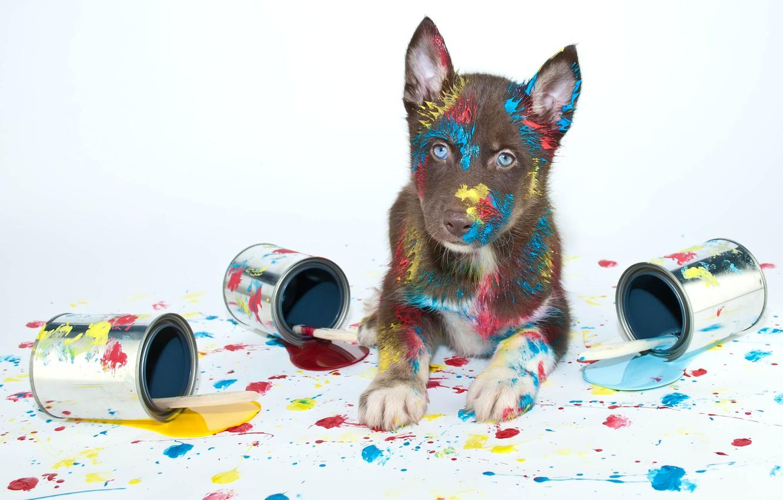 Обои краски, щенок, яйца, кисти. Собаки foto 12