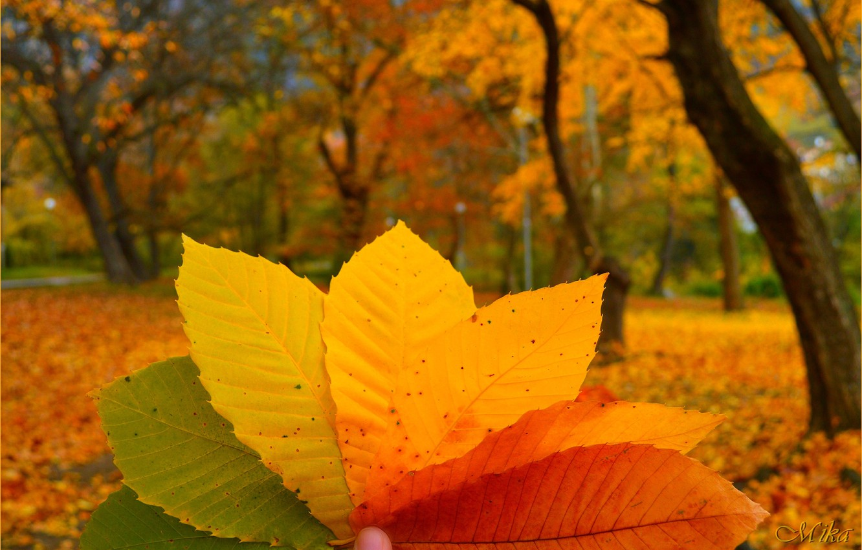 Фото обои Макро, Осень, Листья, Autumn, Colors, Macro, Leaves