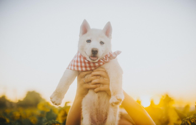 Собака на руках картинки