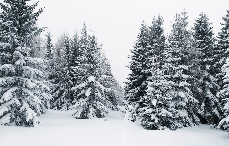 рынка картинки елочки зимой обои считаются