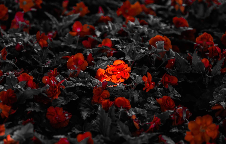 Фото обои свет, цветы, лепестки, луг