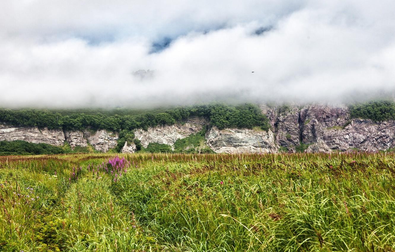 переводе природа камчатки фото лес цены