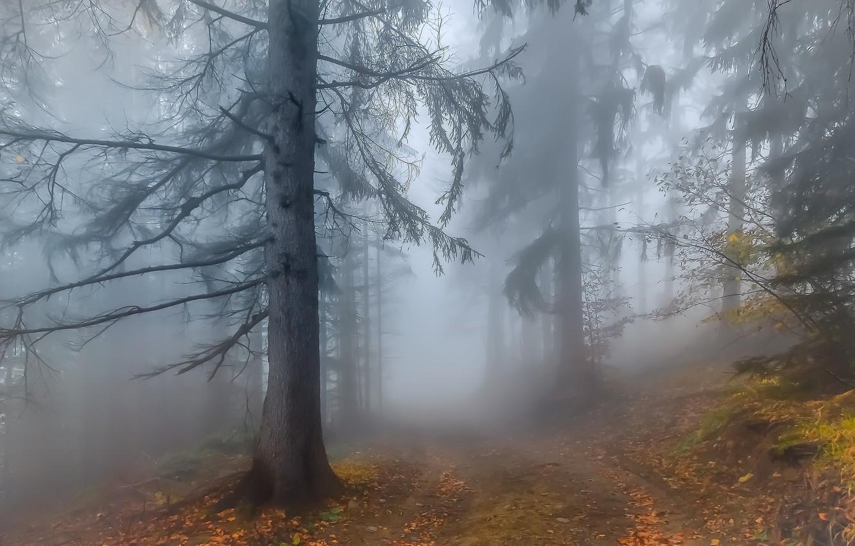 Фото обои Autumn, Fog, Forest, Leaves, Twigs