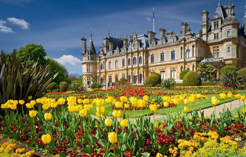 Фото обои цветы, парк, Англия, сад, тюльпаны, особняк, клумбы, England, Buckinghamshire, Waddesdon Manor, примула, Бакингемшир, Поместье Уоддесдон