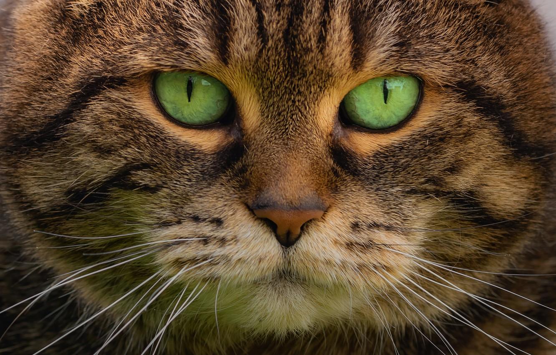 иконки кошки с зелеными глазами фото предпочла первое