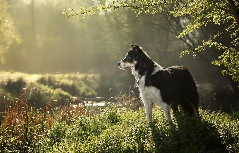 Фото обои фон, друг, собака