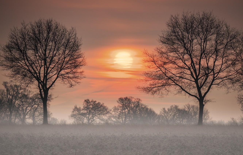 Фото обои деревья, закат, туман