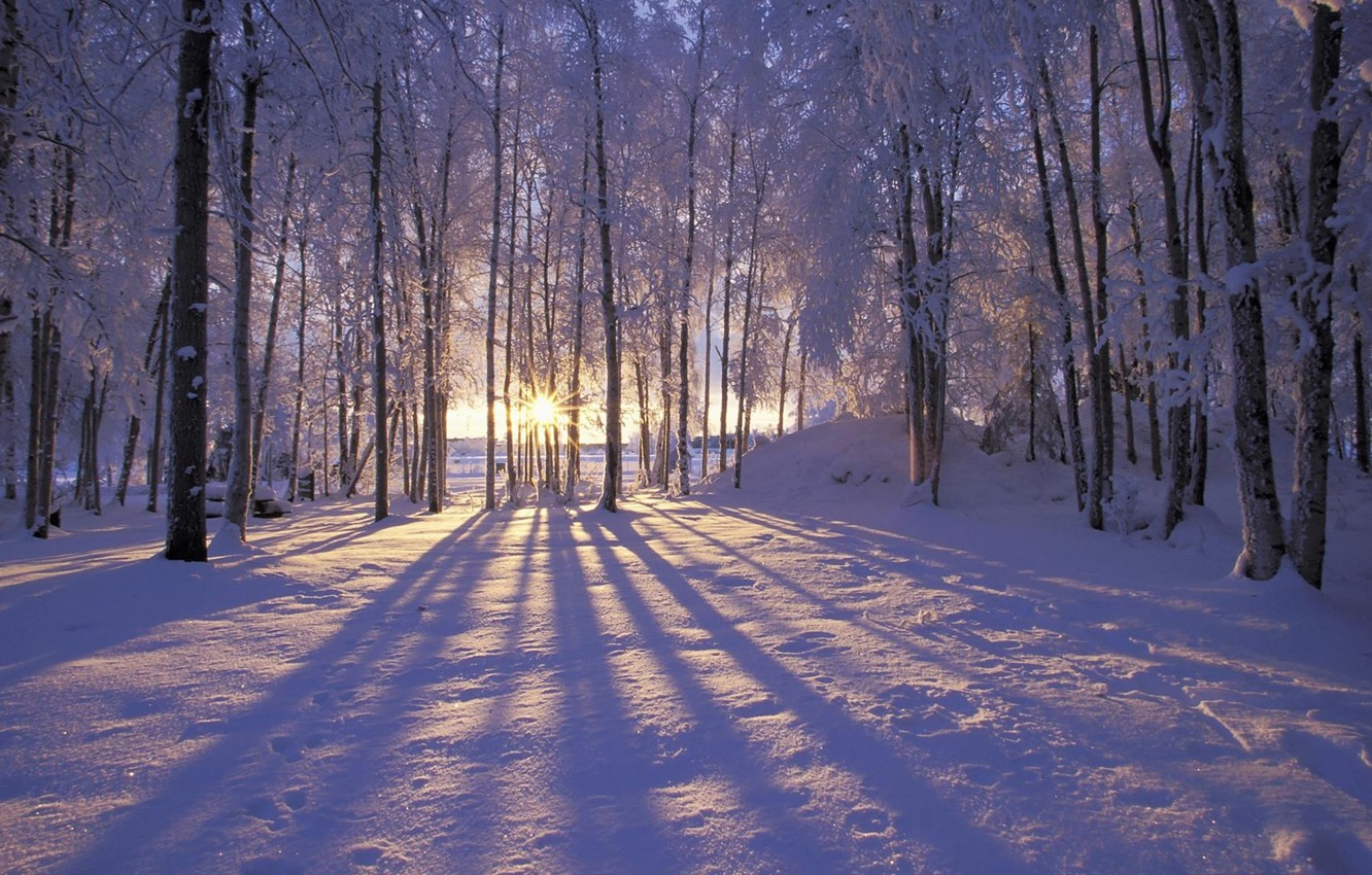 Фото обои forest, Winter, trees, landscape, nature, snow, morning, sun, snowy
