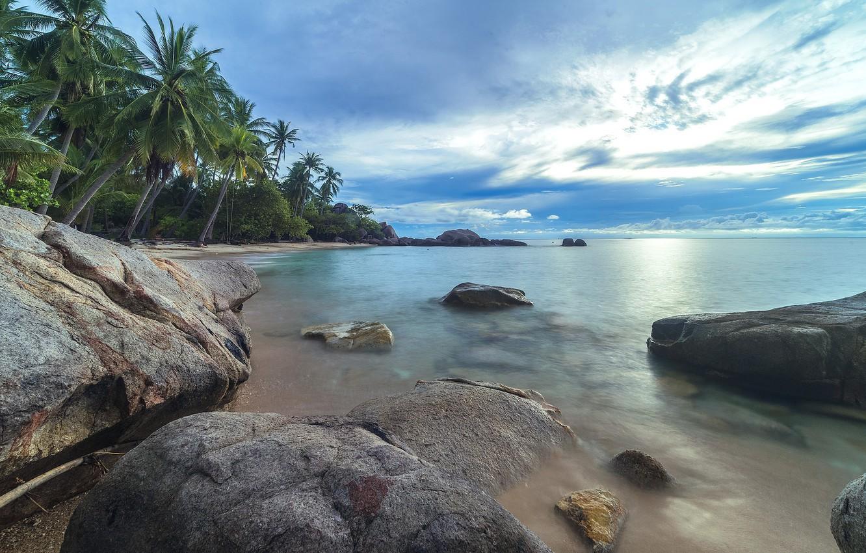 Фото обои море, пляж, лето, природа, тропики, пальмы
