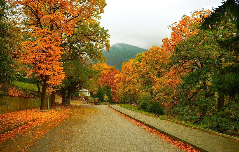 Фото обои Дорога, Осень, Деревья, Гора, Улица, Fall, Листва, Mountain, Autumn, Street, Colors, Leaves