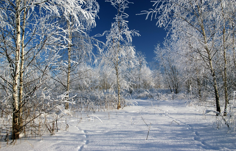 снежная зима в россии фото меняет