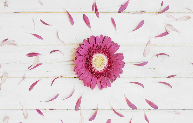 Фото обои цветы, лепестки, герберы