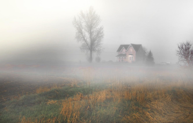 Фото обои поле, пейзаж, природа, туман, дом, дерево