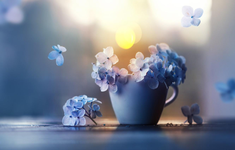 Фото обои цветы, лепестки, чашка, гортензия, Ashraful Arefin