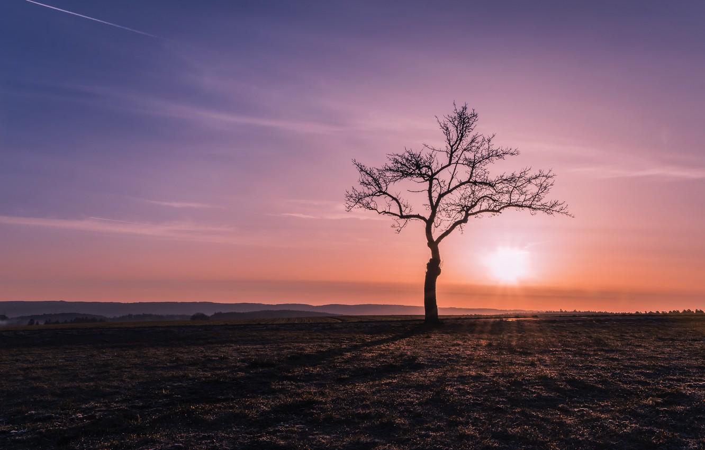 Одинокое дерево картинки