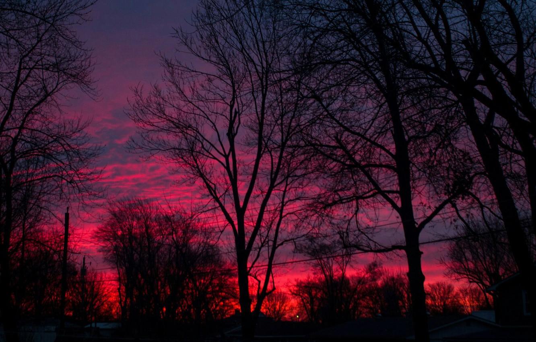 Фото обои небо, закат, девевья