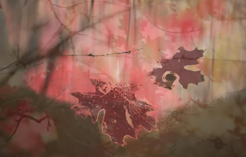 Фото обои листья, фон, цвет