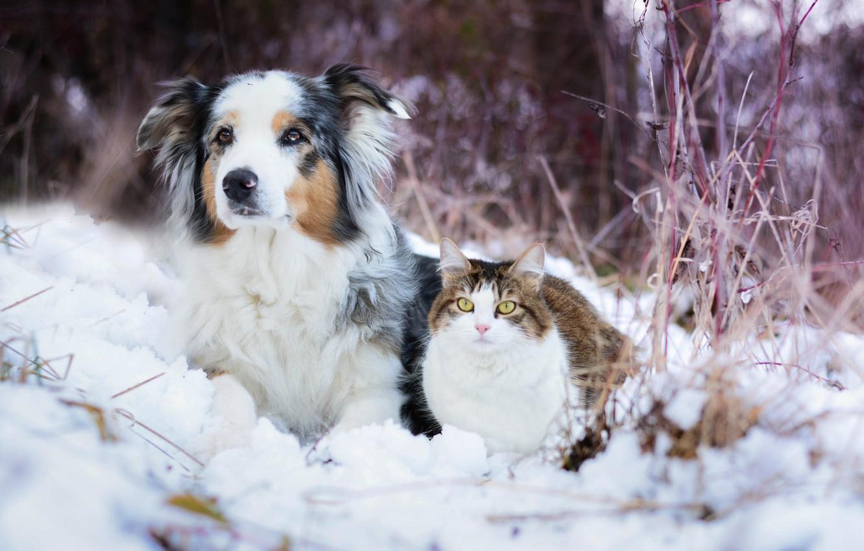 Фото обои зима, кошка, снег, собака