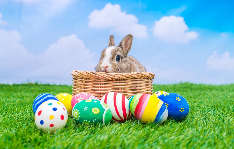 Фото обои праздник, корзина, кролик, пасха, яйца крашенные