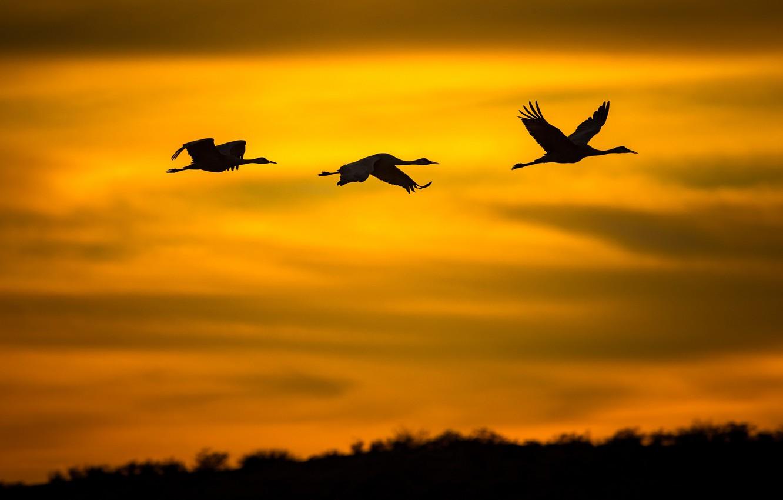 Фото обои полет, птицы, силуэт