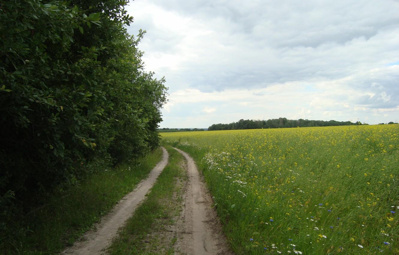 Фото обои зелень, лето, цветы, дорога за грибами