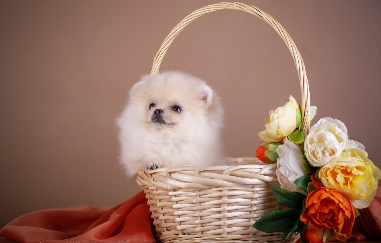 Фото обои цветы, корзина, щенок, ткань