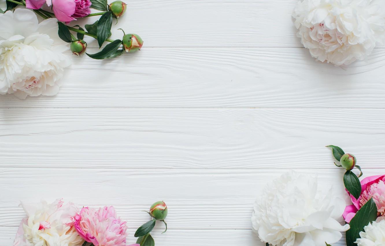 Фото обои цветы, бутоны, пионы