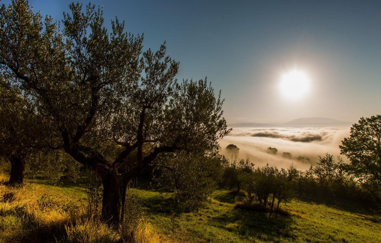 Фото обои небо, туман, дерево