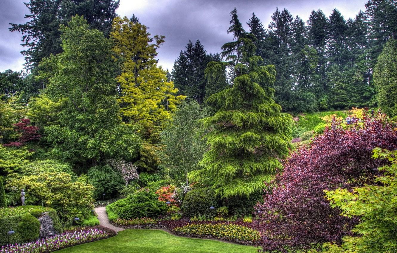 Фото обои деревья, парк, красота